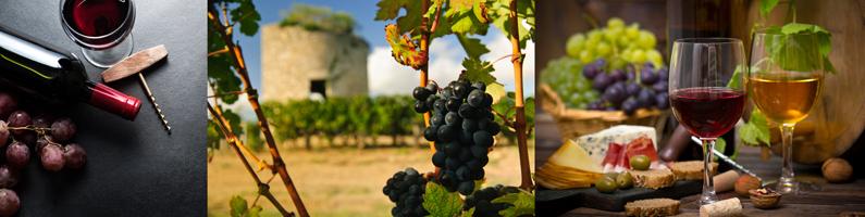 histoire des vignobles dans les landes
